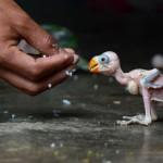 Papegaai Soorten